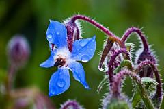SpringWildflower